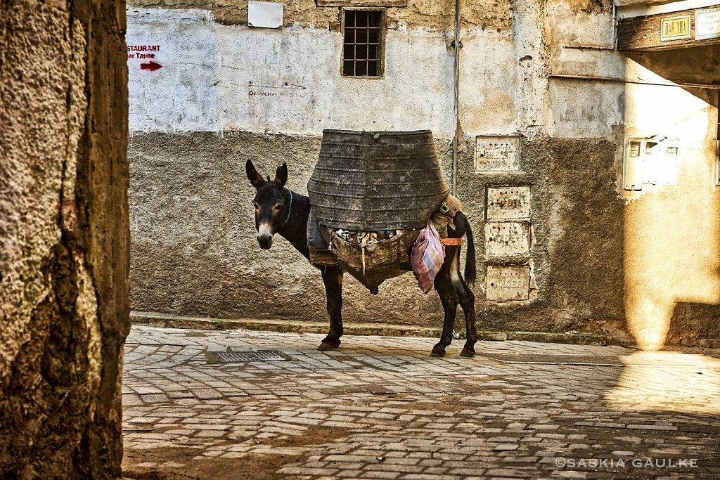 1812-MarokkoSKG-6056-Kopie.jpg